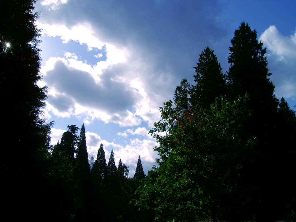 electric blue sky with pines