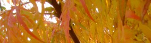 cropped-orange leaves