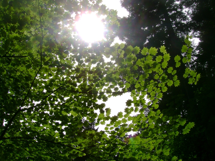 hope light in leaves