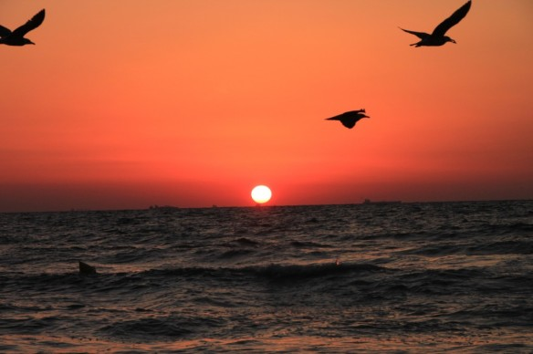 Birds-Flying-above-the-Sea-at-Sunrise_by public photo.com