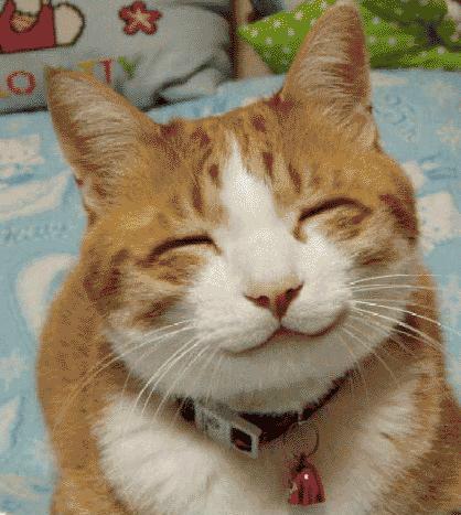 Smiling Cat in public domain