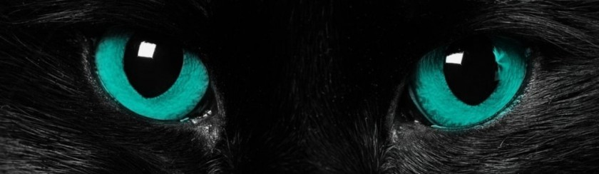 cropped-cat-eyes.jpg