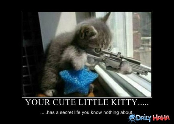 hilarious%20funny%20cute%20pictures%20of_your-cute-kitty