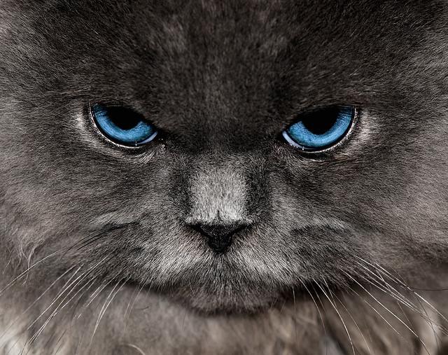 cat anger simmering