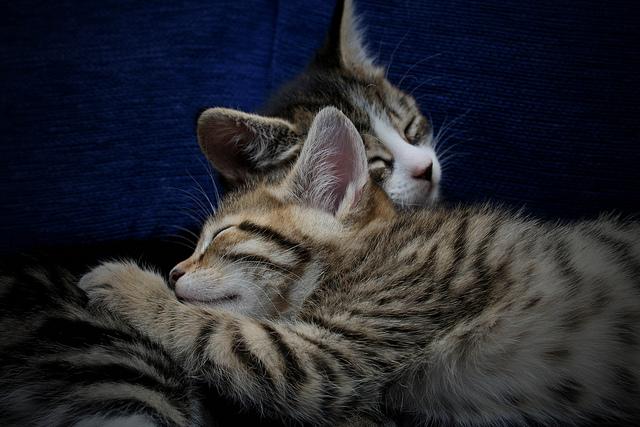 cat hugs