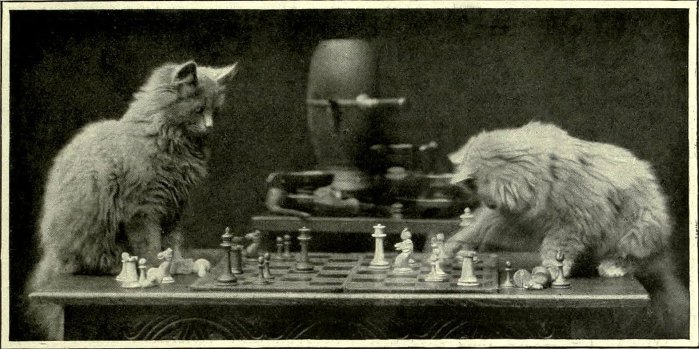 Cats playing chess, wow are they smart!