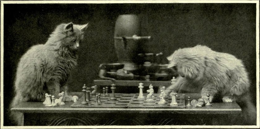 Cat_chess_2