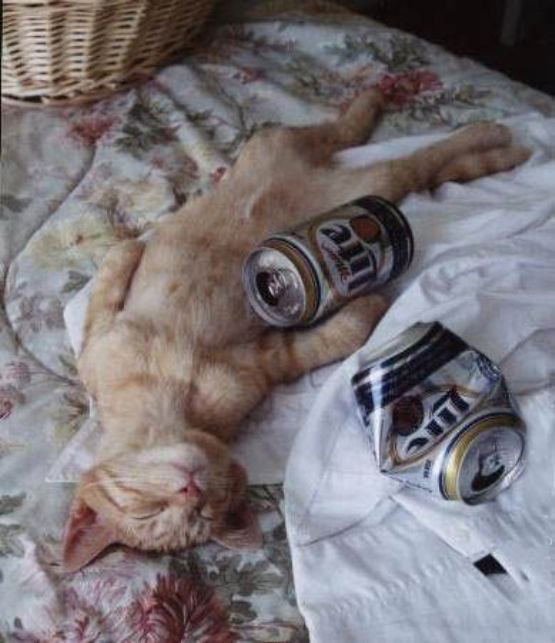 comedy drunk_cat_passed_out1