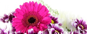cropped-purple-flower-bouquet-free-stock-photo-hd-public-domain-pictures.jpg
