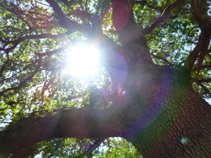 view-through-my-eyes-tree-near-work.jpg