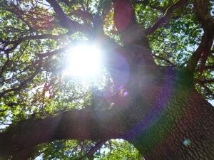 view-through-my-eyes-tree-near-work.jpg