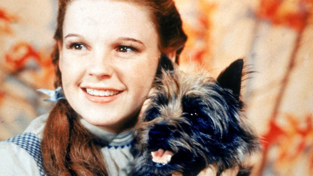 neighbor dorothy and toto