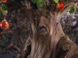 TreeWiz