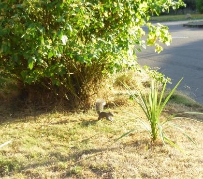autumn squirrel on walk