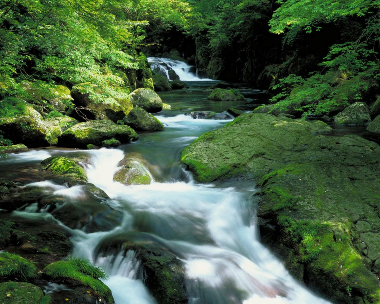 easy forest-rocks-waterfalls-rivers-rapids-2048x2560