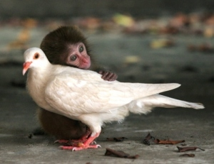 nonsense monkey and bird cute love