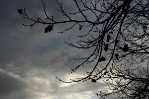 rain_leaves_rain_cloud