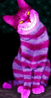 cheshire cat 5