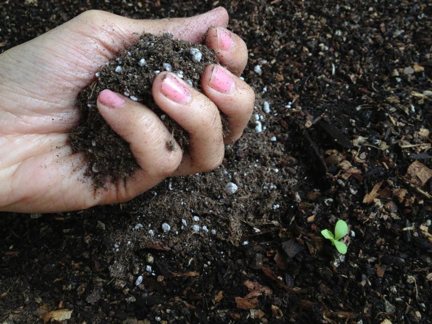dirt hand photo(2)