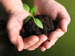 dirt plant hands