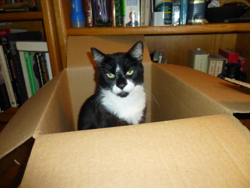 mario in box