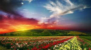 roses-flower-garden-flowers-1080p-hd-wallpaper