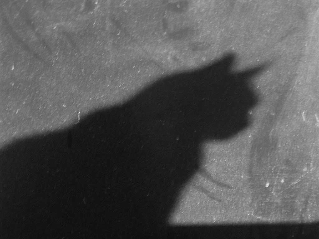 I AM Catwoman   Life Is Color: https://strawberryindigo.wordpress.com/2014/07/26/i-am-catwoman/