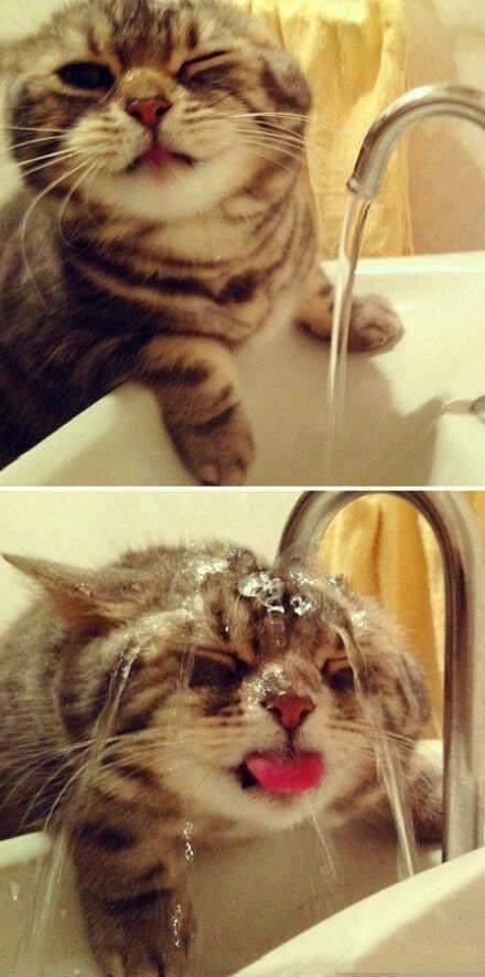 cat gets wet random