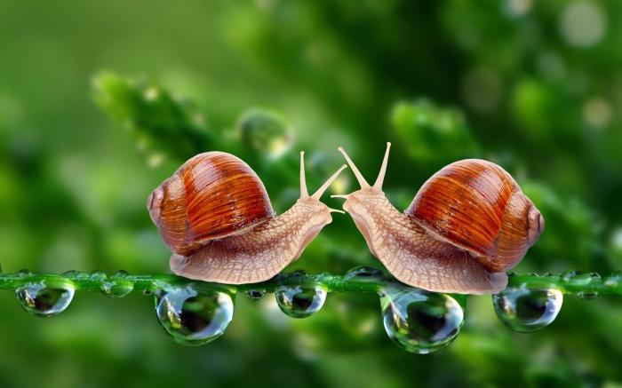 love snails art