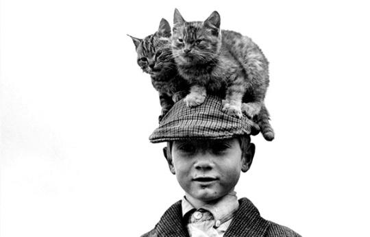 strange-and-funny-vintage-animal-photographs-4 mad