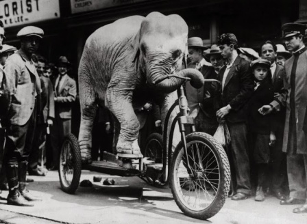 Vintage Intelligent Animals (1) elephant mad