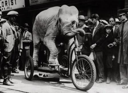 Vintage Intelligent Animals (1) elephant mad