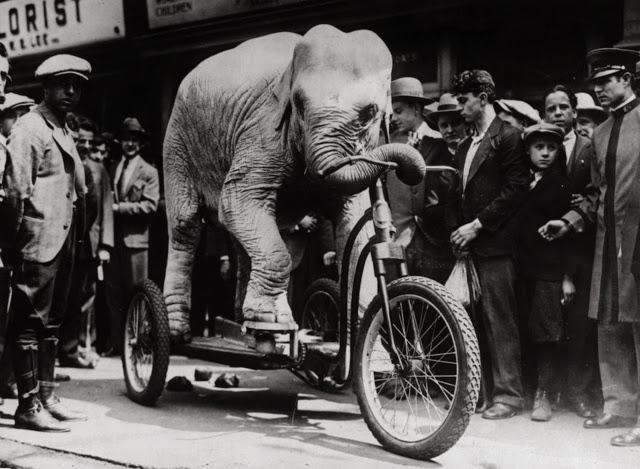 vintage-intelligent-animals-1-elephant-m