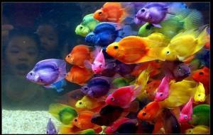 tropical-fish-theme_school color