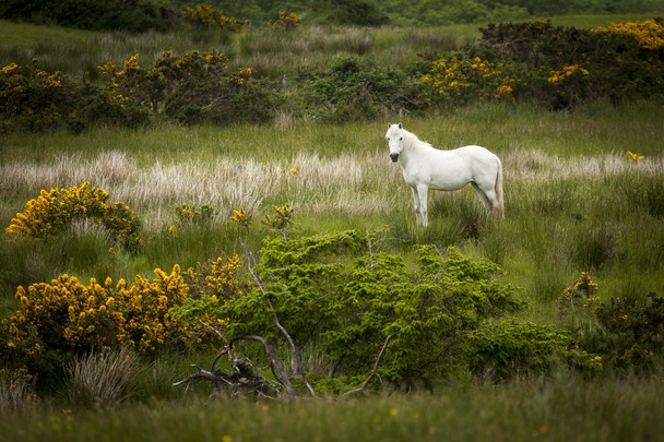 Whitepark Rd, Antrim county, Nothern Ireland