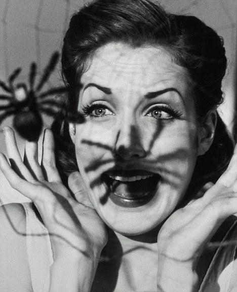 spider scream