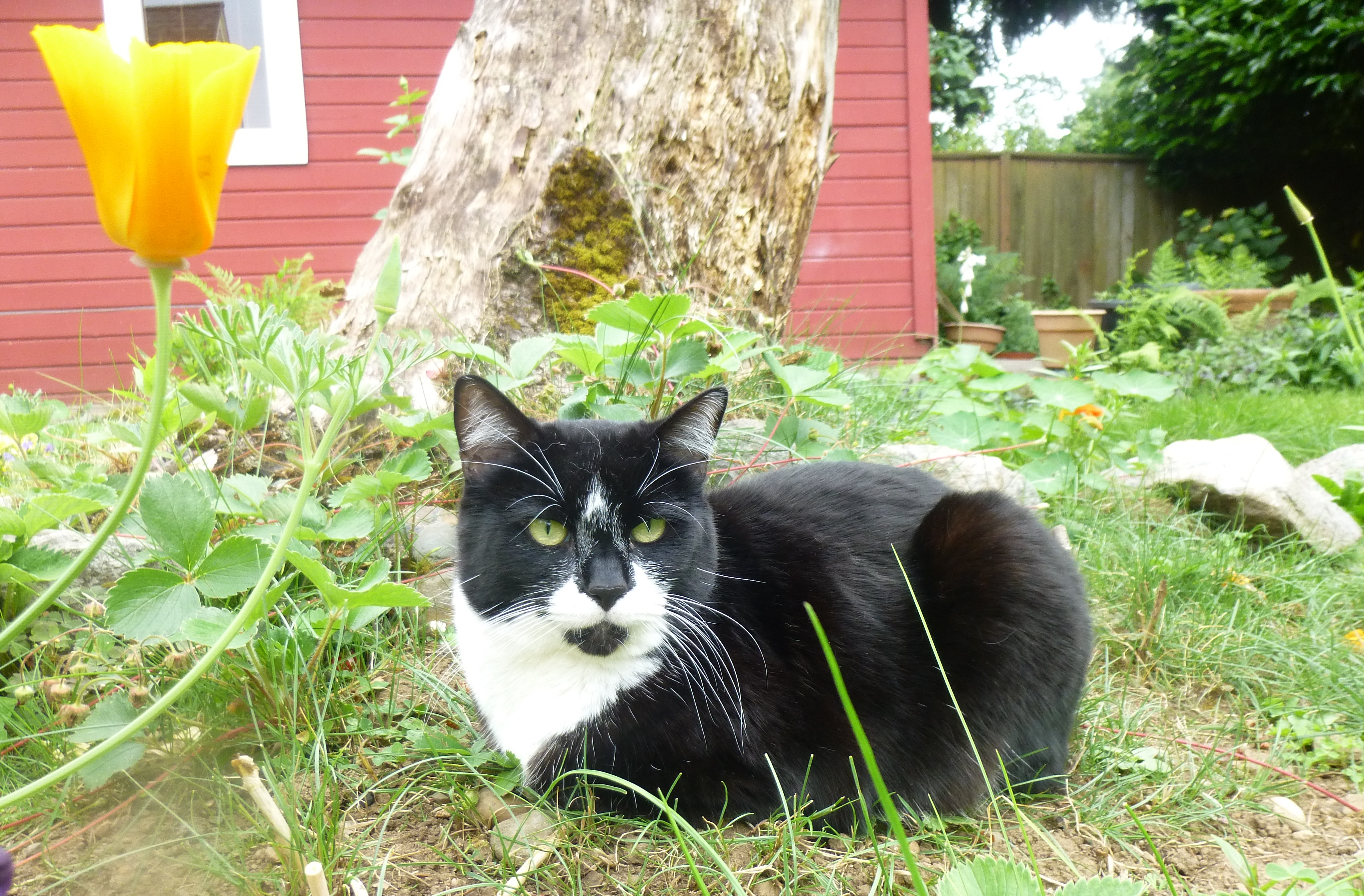 Mario my famous cat and gardening companion.