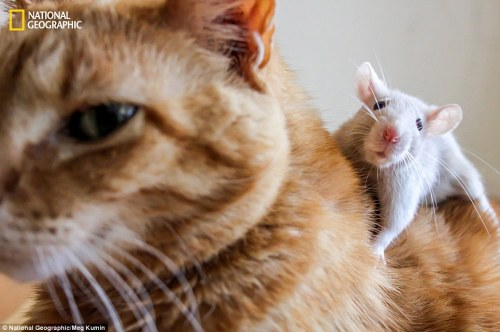 cat mouse funny cute pair