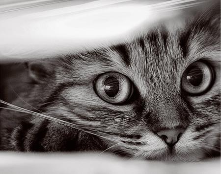 cat face