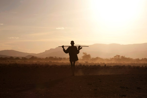 A Turkana man herds livestock back from grazing grounds in Kenya, Africa where desertification in a problem.
