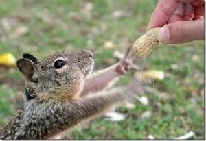 squirrels-2d13
