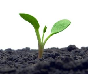 tiny seedling plant