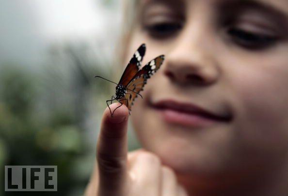 butterfly-on-finger child girl