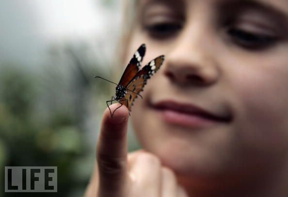 butterfly-on-finger child girl