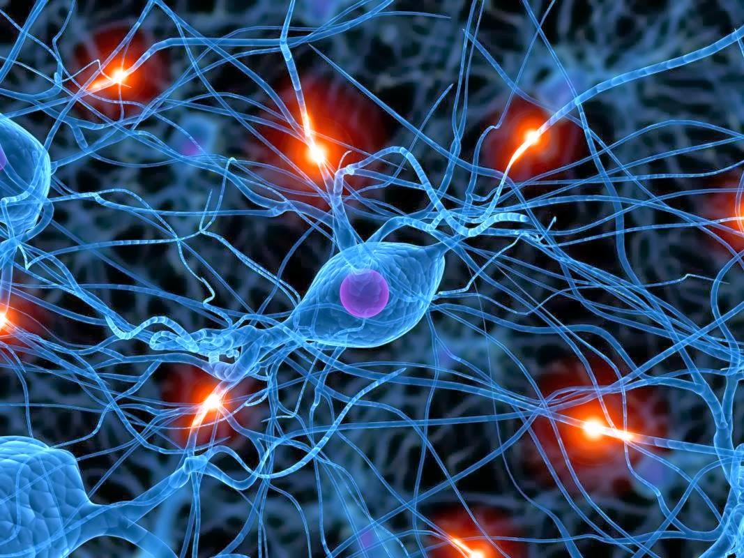 Human Brain Cells Under a Microscope Human Brain Cells Under a