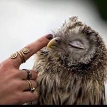 owl animal pet love