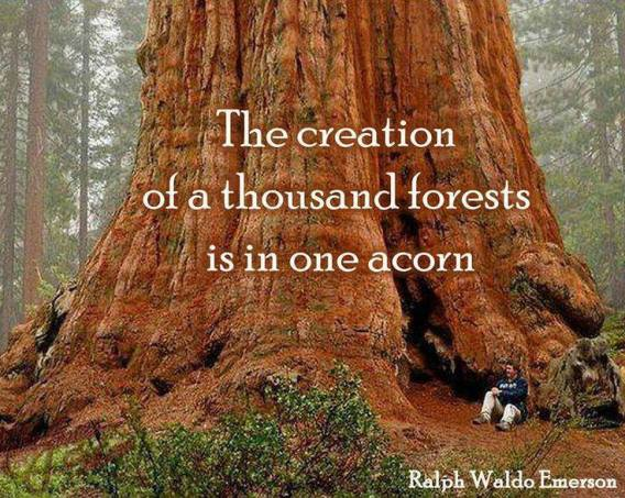 quote tree acorn creation nature