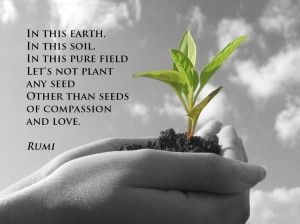 seeds-of-compassion-and-love-rumi quote