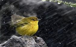 bird-in-rain-