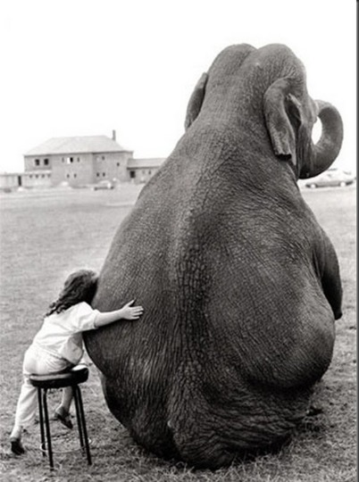 vintage girl and elephant friend